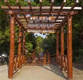 Andaman Lagoons - Popuplar Destination, Place to Visit or Sightseeing - Dhaninalah Mangrove Walk Way at Rangat (North and Middle Andaman) in Andaman Islands